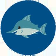 Swordfish - 6 to 12 years